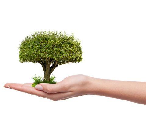 baum-pflanzen-projekt