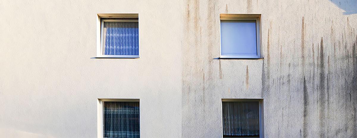 Grünbelag von Hauswand entfernen